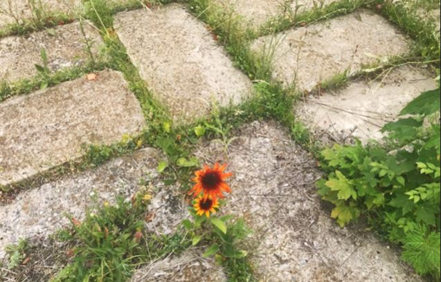 A photo of an orange flower and grass growing through concrete pavers